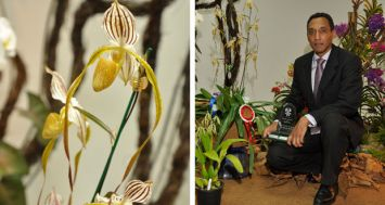 Le «Best Orchid on Show» est allé à Ronny Pazot pour son Paphiopedilum «Mount Toro». (Photos : Clifford Francisque)