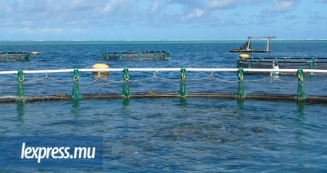(Photo d'illustration) La ferme aquacole de Growfish International (Mauritius) Ltd devrait voir le jour à Bambous.