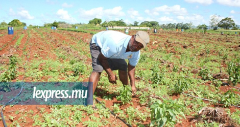 The perennial problem of small farmers is coping with higher labour costs, since few young people want to work in agriculture.