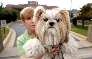 Shellie Goldstein de Gaithersburg, Maryland, tient son chien de thérapie Shih Tzu «Emma» devant les portes de la National Institutes of Health à Bethesda, Maryland.