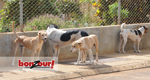 Dog For Adoption In Mauritius