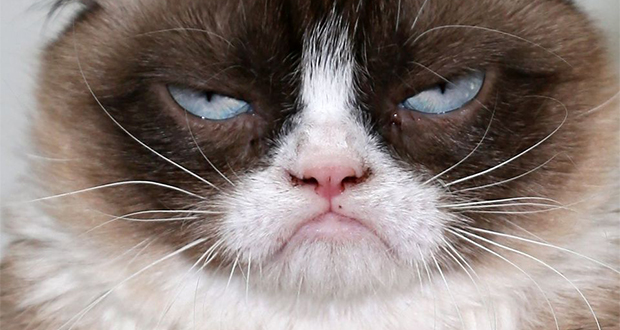 Mort de Grumpy Cat, star d'internet